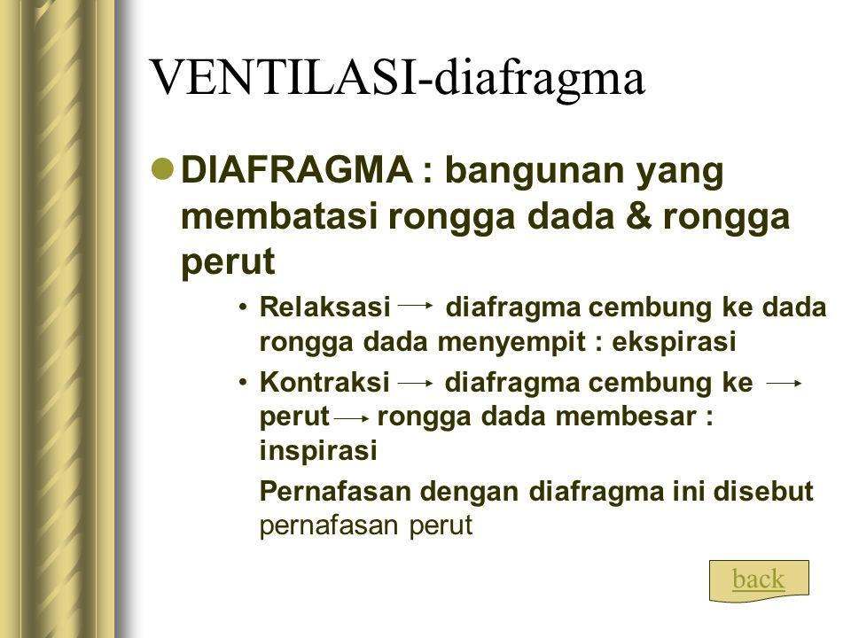 VENTILASI-diafragma DIAFRAGMA : bangunan yang membatasi rongga dada & rongga perut Relaksasi diafragma cembung ke dada rongga dada menyempit : ekspira