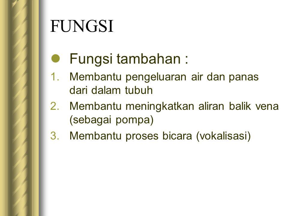 FUNGSI Fungsi tambahan : 1.Membantu pengeluaran air dan panas dari dalam tubuh 2.Membantu meningkatkan aliran balik vena (sebagai pompa) 3.Membantu pr
