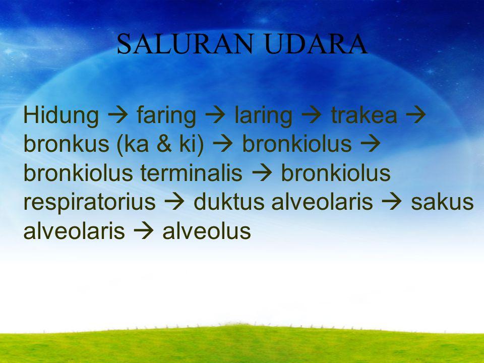 SALURAN UDARA Hidung  faring  laring  trakea  bronkus (ka & ki)  bronkiolus  bronkiolus terminalis  bronkiolus respiratorius  duktus alveolari