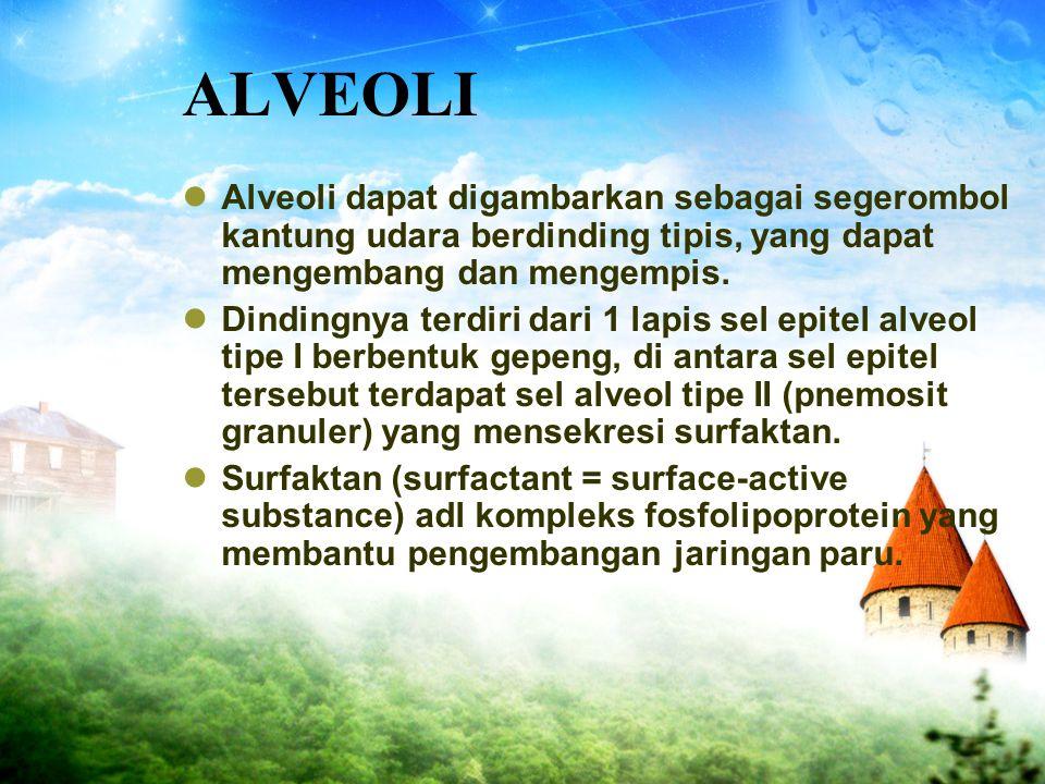 ALVEOLI Alveoli dapat digambarkan sebagai segerombol kantung udara berdinding tipis, yang dapat mengembang dan mengempis. Dindingnya terdiri dari 1 la