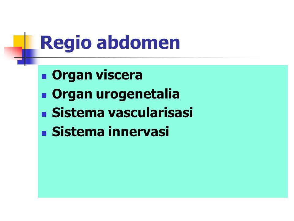 Regio abdomen Organ viscera Organ urogenetalia Sistema vascularisasi Sistema innervasi