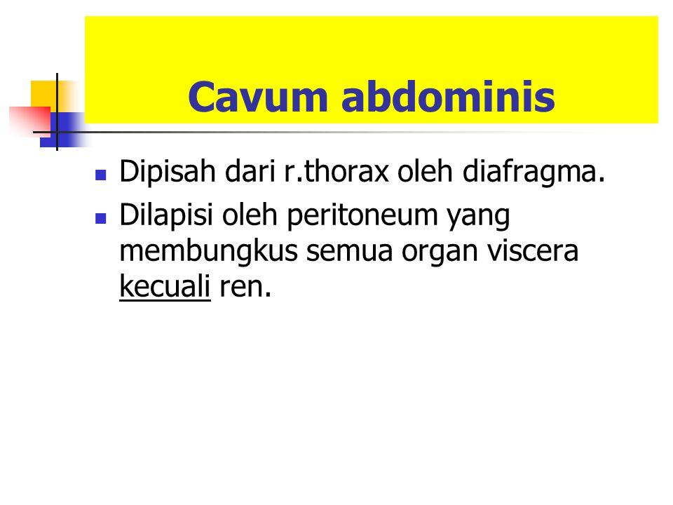 Cavum abdominis Dipisah dari r.thorax oleh diafragma. Dilapisi oleh peritoneum yang membungkus semua organ viscera kecuali ren.