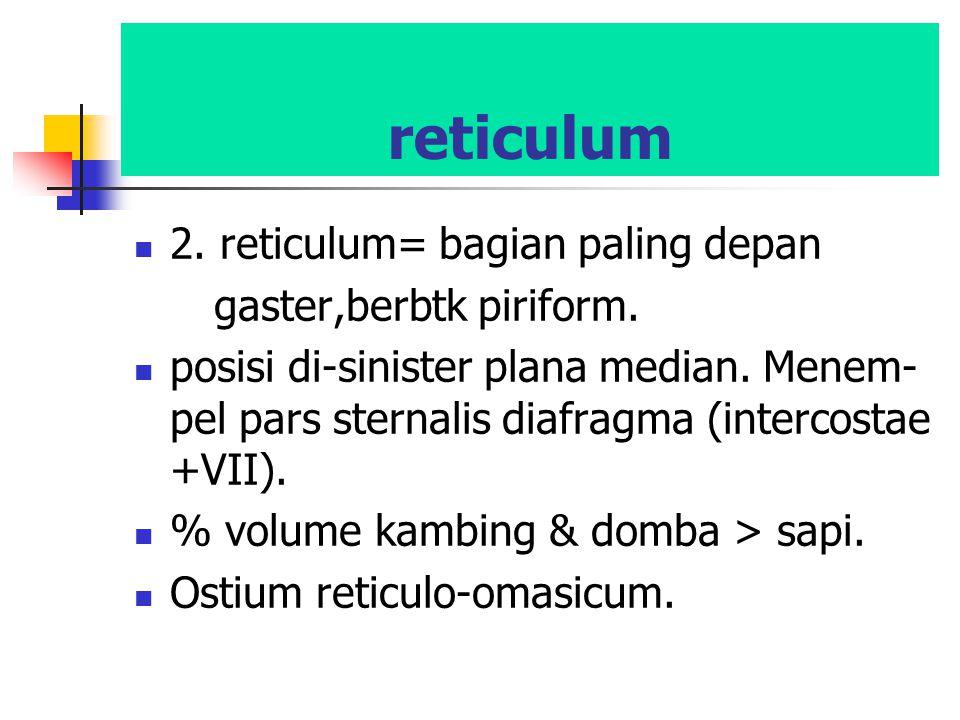 reticulum 2. reticulum= bagian paling depan gaster,berbtk piriform. posisi di-sinister plana median. Menem- pel pars sternalis diafragma (intercostae