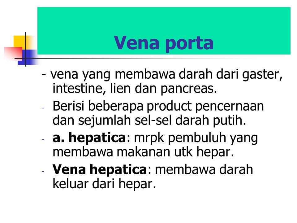 Vena porta - vena yang membawa darah dari gaster, intestine, lien dan pancreas. - Berisi beberapa product pencernaan dan sejumlah sel-sel darah putih.