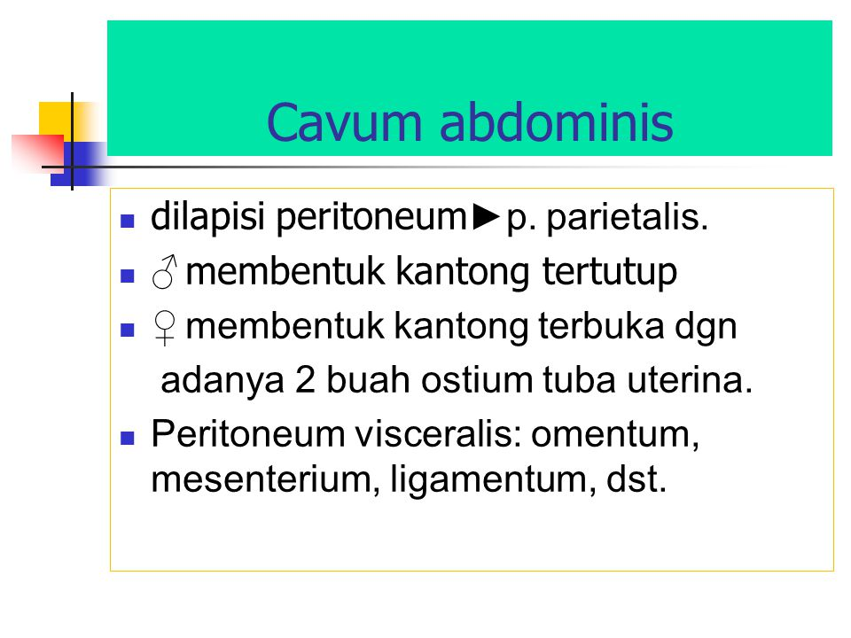 Cavum abdominis dilapisi peritoneum ►p. parietalis. ♂ membentuk kantong tertutup ♀ membentuk kantong terbuka dgn adanya 2 buah ostium tuba uterina. Pe