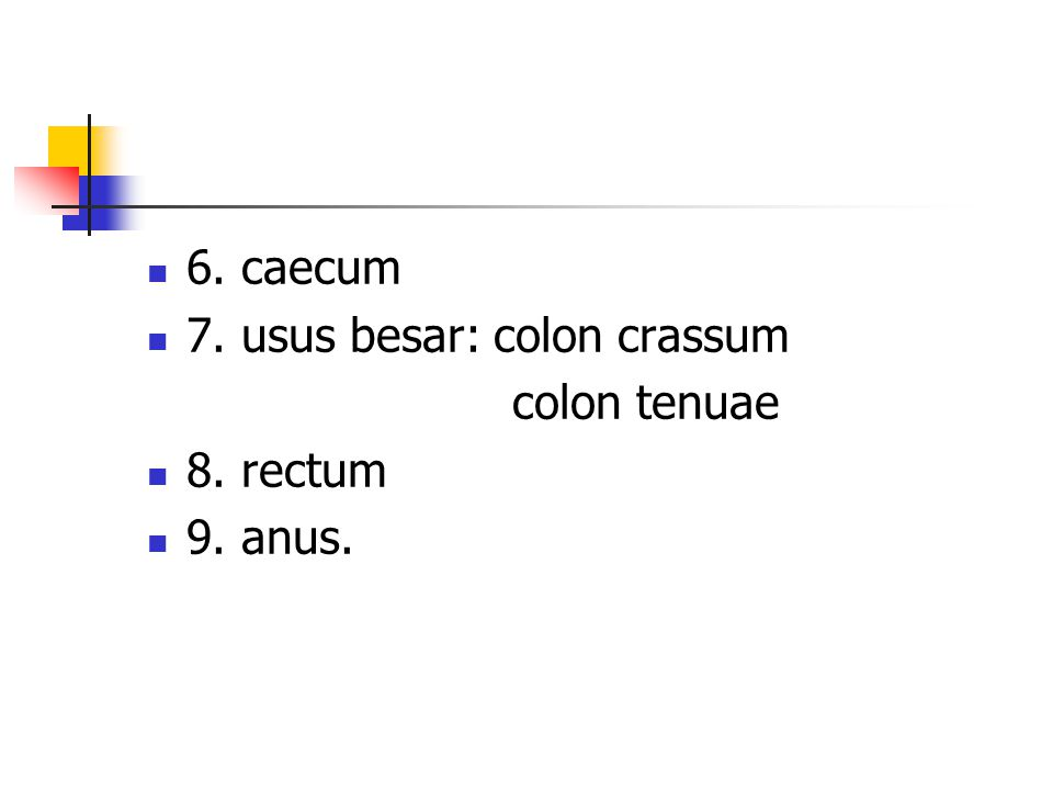 6. caecum 7. usus besar: colon crassum colon tenuae 8. rectum 9. anus.