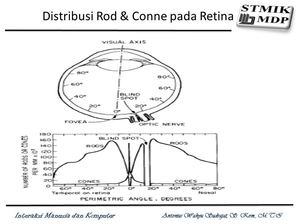 Interaksi Manusia dan Komputer Antonius Wahyu Sudrajat, S. Kom., M.T.I Distribusi Rod & Conne pada Retina
