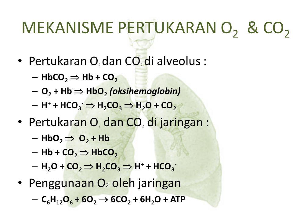 Pertukaran O 2 dan CO 2 di alveolus : – HbCO 2  Hb + CO 2 – O 2 + Hb  HbO 2 (oksihemoglobin) – H + + HCO 3 -  H 2 CO 3  H 2 O + CO 2 Pertukaran O