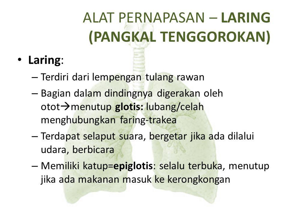 Glotis dan Epiglotis
