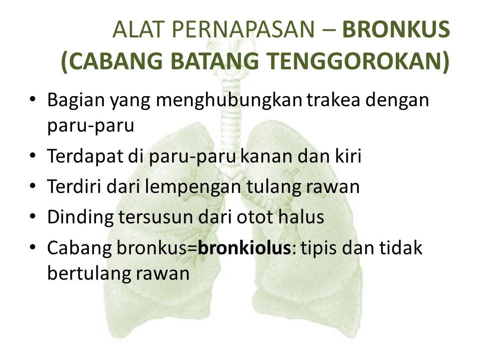 ALAT PERNAPASAN – BRONKUS (CABANG BATANG TENGGOROKAN)