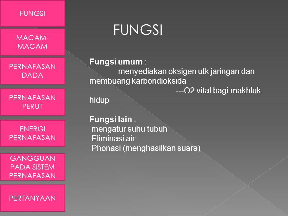 FUNGSI Fungsi umum : menyediakan oksigen utk jaringan dan membuang karbondioksida ---O2 vital bagi makhluk hidup Fungsi lain : mengatur suhu tubuh Eli