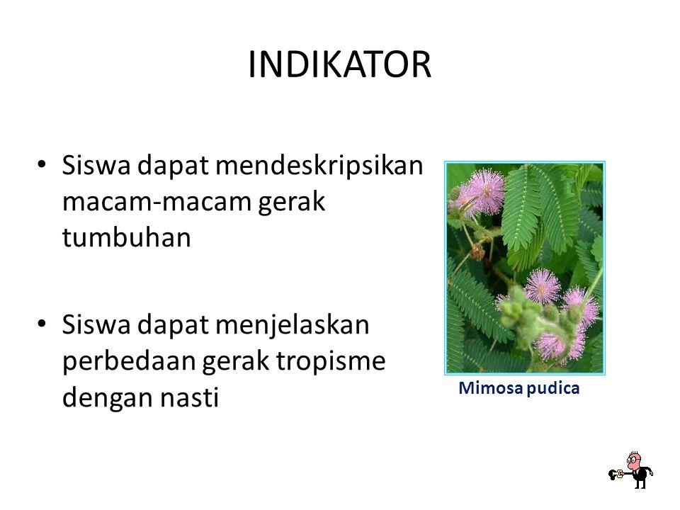 INDIKATOR Siswa dapat mendeskripsikan macam-macam gerak tumbuhan Siswa dapat menjelaskan perbedaan gerak tropisme dengan nasti Mimosa pudica