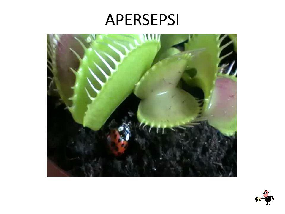 APERSEPSI