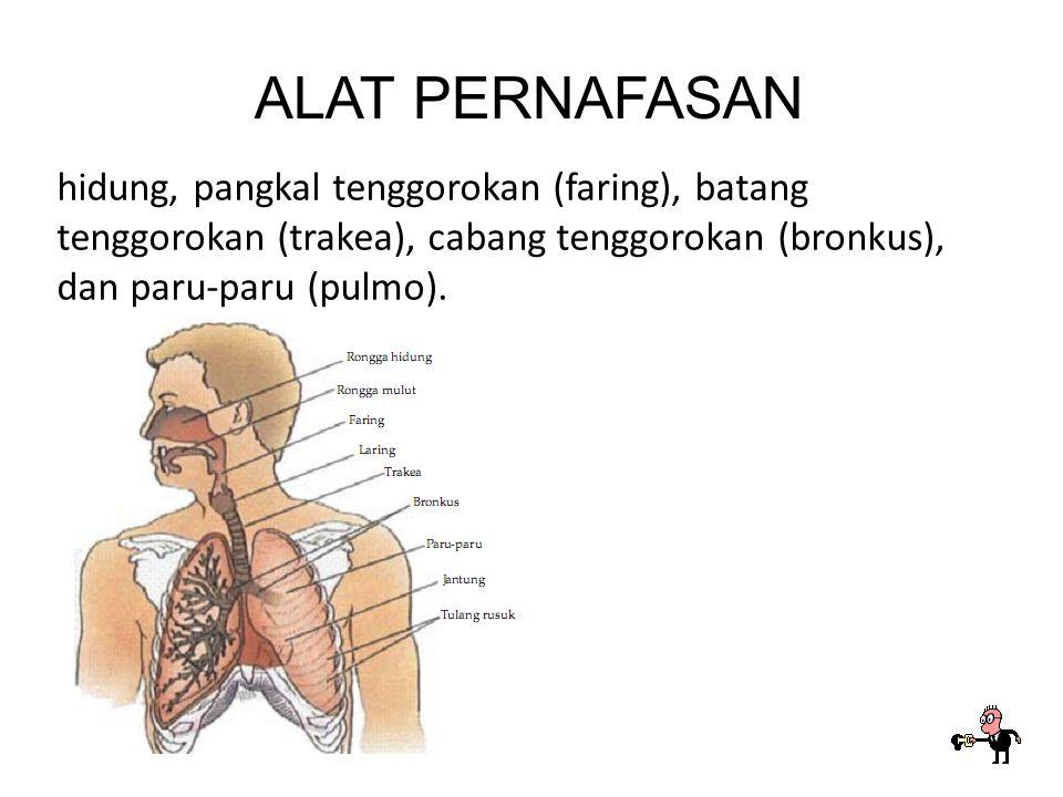 PERNAFASAN Pernafasan manusia bertujuan untuk memperoleh oksigen dari udara dan mengeluarkan gas sisa pembakaran dari dalam tubuh.