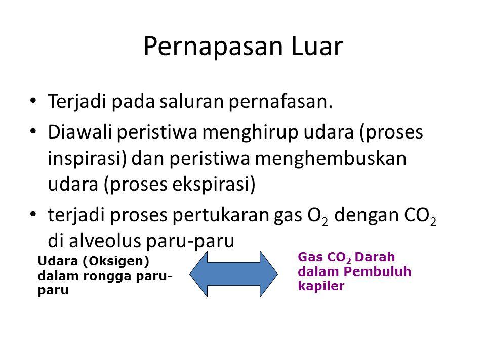 Pernapasan--- 3 fase Pernapasan Luar (eksternal) Pernapasan Dalam (internal) Pernapasan Sel