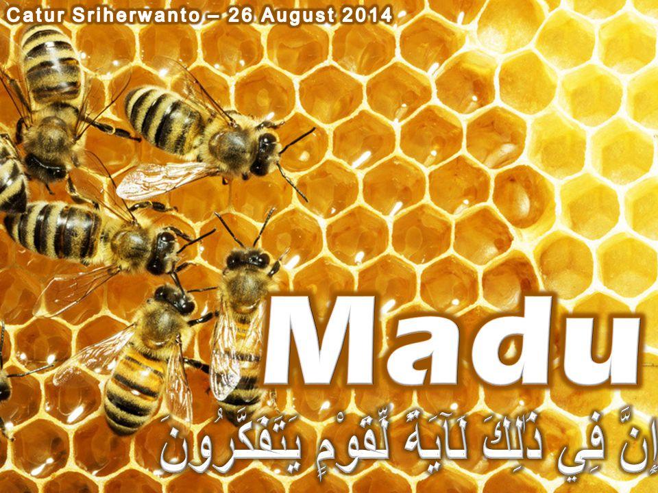 TABLE 2.-Carbohydrate composition of honey types Number of samples Floral type DextroseLevuloseSucroseMaltose Higher Sugars Percent 23Alfalfa33.4039.112.646.01.89 25Alfalfa-sweetclover33.5739.292.006.30.91 5Aster31.3337.55.818.451.04 3Basswood31.5937.881.206.861.44 3Blackberry25.9437.641.2711.332.50 5Buckwheat29.4635.30.787.632.27 4Buckwheat, wild30.5039.72.797.21.83 26 Clover 32.2237.841.446.601.39 3Clover, alsike30.7239.181.407.461.55 3Clover, crimson30.8738.21.918.591.63 3Clover, Hubam33.4238.69.866.23.74 10Cotton36.7439.281.144.87.50 3Fireweed30.7239.811.287.122.06 6Gallberry30.1539.85.727.711.22 3Goldenrod33.1539.57.516.57.59 2Heartsease32.9837.231.955.71.53 2Holly25.6538.981.0010.072.16 3Honeydew, cedar25.9225.16.686.209.61 5Honeydew, oak27.4334.84.8410.452.16 2Horsemint33.6337.371.015.53.73 3Locust, black28.0040.661.018.421.90 3Loosestrife, purple29.9037.75.628.132.35 3Mesquite36.9040.41.955.42.35 4Orange, California32.0139.082.686.261.23 13Orange, Florida31.9638.912.607.291.40 4Raspberry28.5434.46.518.683.58 3Sage28.1940.391.137.402.38 3Sourwood24.6139.79.9211.792.44 4Star-thistle31.1436.912.276.922.74 8Sweetclover30.9737.951.417.751.40 3Sweetelover, yellow32.8139.222.946.63.97 4Tulip tree25.8534.65.6911.572.96 5Tupelo25.9543.271.217.971.11 7Vetch31.6738.331.347.231.83 9Vetch, hairy30.6438.202.037.812.08 12White clover30.7138.361.037.321.56 Percent DextroseLevuloseSucroseMaltose Higher sugars BEEKEEPING IN THE UNITED STATES AGRICULTURE HANDBOOK NUMBER 335
