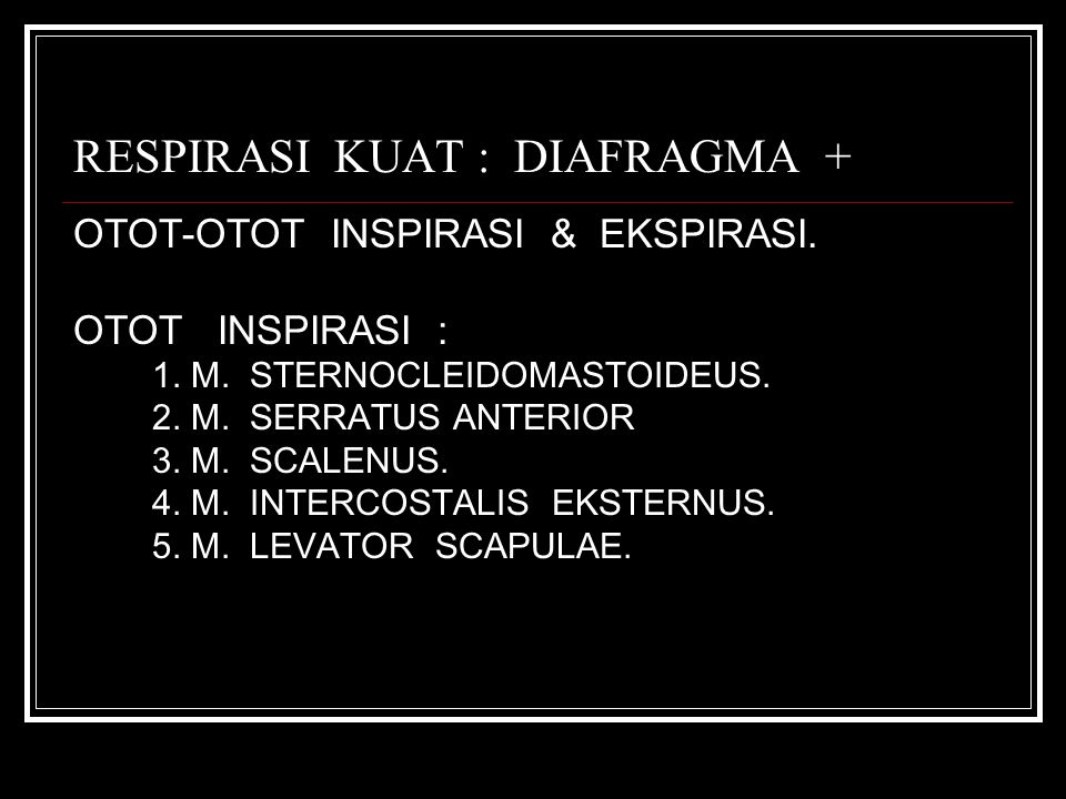 RESPIRASI KUAT : DIAFRAGMA + OTOT-OTOT INSPIRASI & EKSPIRASI. OTOT INSPIRASI : 1. M. STERNOCLEIDOMASTOIDEUS. 2. M. SERRATUS ANTERIOR 3. M. SCALENUS. 4