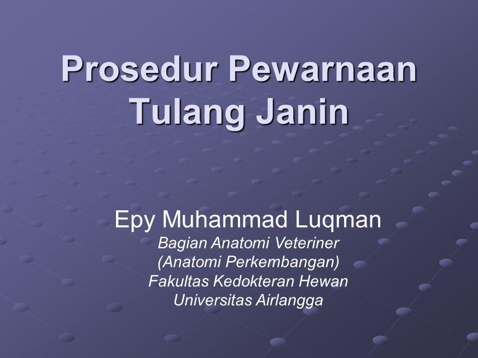 Prosedur Pewarnaan Tulang Janin Epy Muhammad Luqman Bagian Anatomi Veteriner (Anatomi Perkembangan) Fakultas Kedokteran Hewan Universitas Airlangga