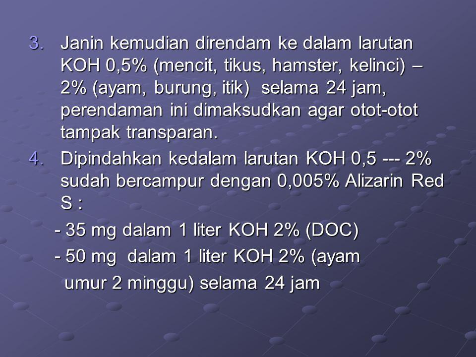 3.Janin kemudian direndam ke dalam larutan KOH 0,5% (mencit, tikus, hamster, kelinci) – 2% (ayam, burung, itik) selama 24 jam, perendaman ini dimaksud