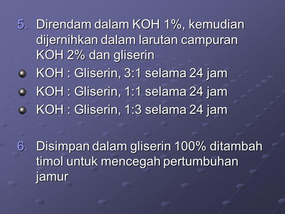 5.Direndam dalam KOH 1%, kemudian dijernihkan dalam larutan campuran KOH 2% dan gliserin KOH : Gliserin, 3:1 selama 24 jam KOH : Gliserin, 1:1 selama