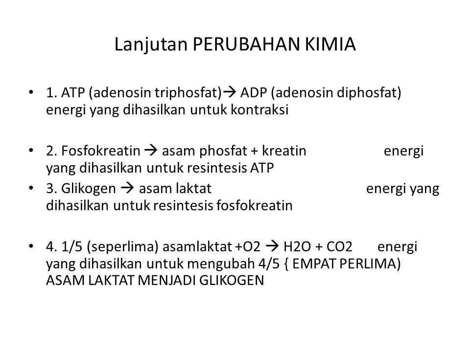 Lanjutan PERUBAHAN KIMIA 1. ATP (adenosin triphosfat)  ADP (adenosin diphosfat) energi yang dihasilkan untuk kontraksi 2. Fosfokreatin  asam phosfat