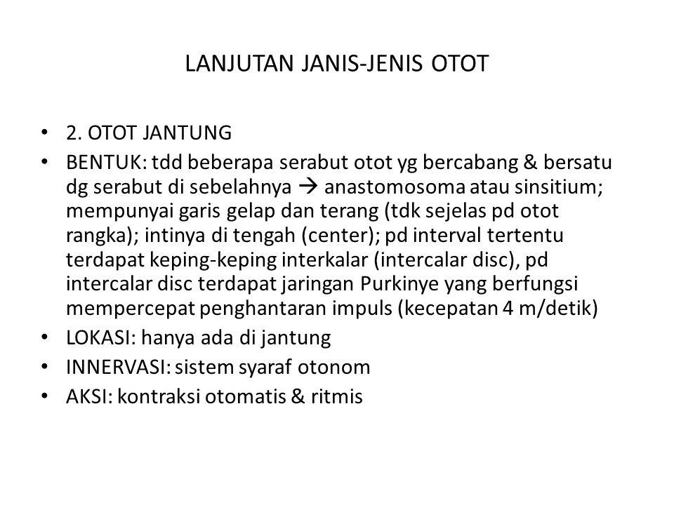 LANJUTAN JANIS-JENIS OTOT 2. OTOT JANTUNG BENTUK: tdd beberapa serabut otot yg bercabang & bersatu dg serabut di sebelahnya  anastomosoma atau sinsit