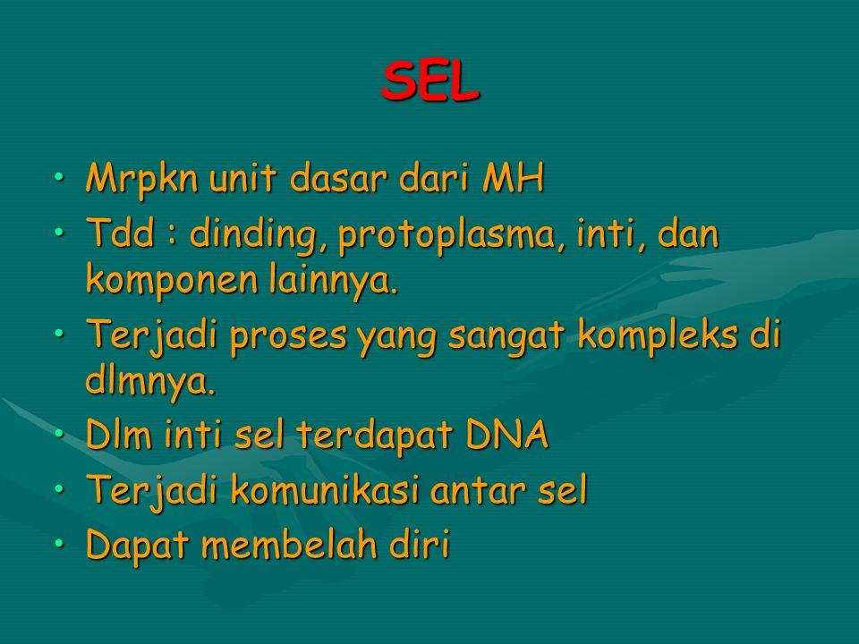 SEL Mrpkn unit dasar dari MHMrpkn unit dasar dari MH Tdd : dinding, protoplasma, inti, dan komponen lainnya.Tdd : dinding, protoplasma, inti, dan komp