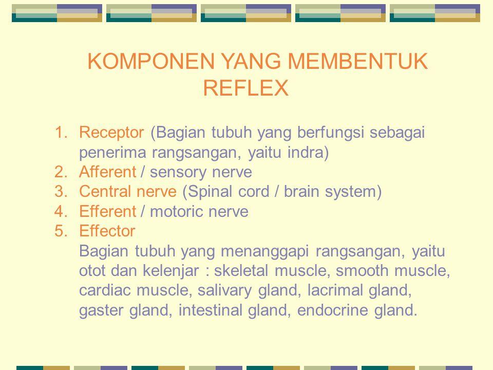 KOMPONEN YANG MEMBENTUK REFLEX 1.Receptor (Bagian tubuh yang berfungsi sebagai penerima rangsangan, yaitu indra) 2.Afferent / sensory nerve 3.Central