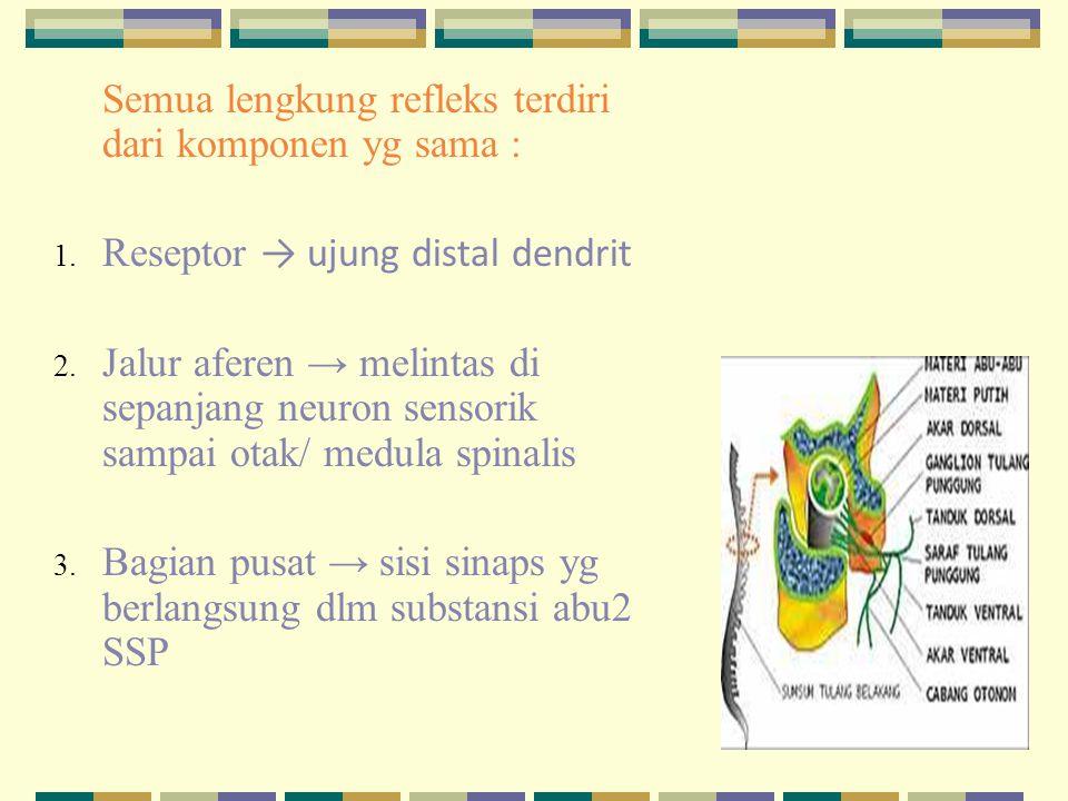 Semua lengkung refleks terdiri dari komponen yg sama : 1. Reseptor → ujung distal dendrit 2. Jalur aferen → melintas di sepanjang neuron sensorik samp