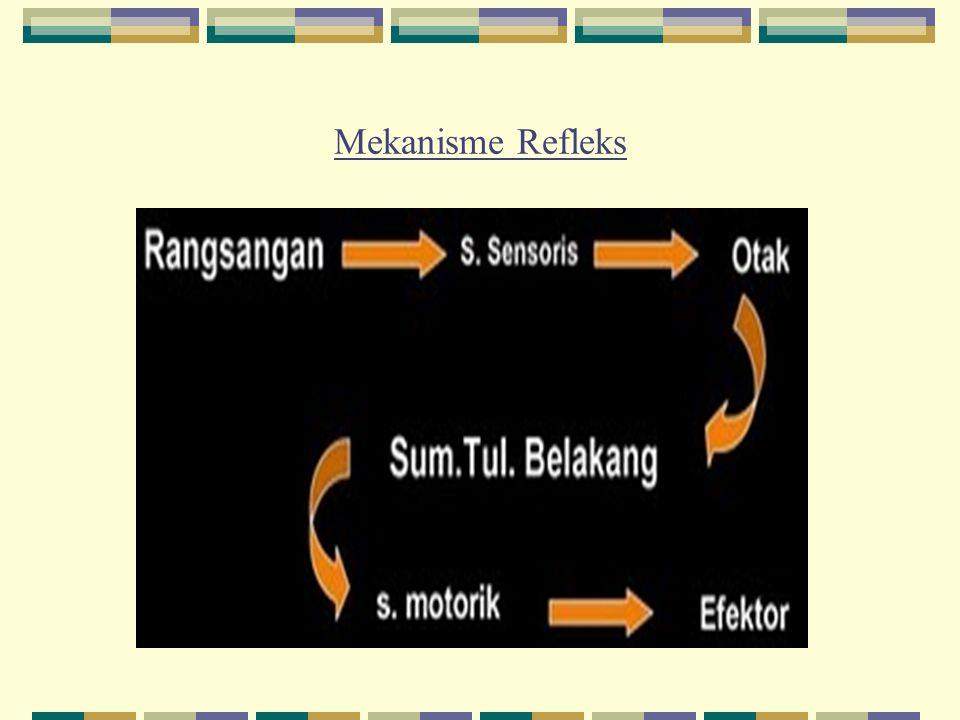 Mekanisme Refleks