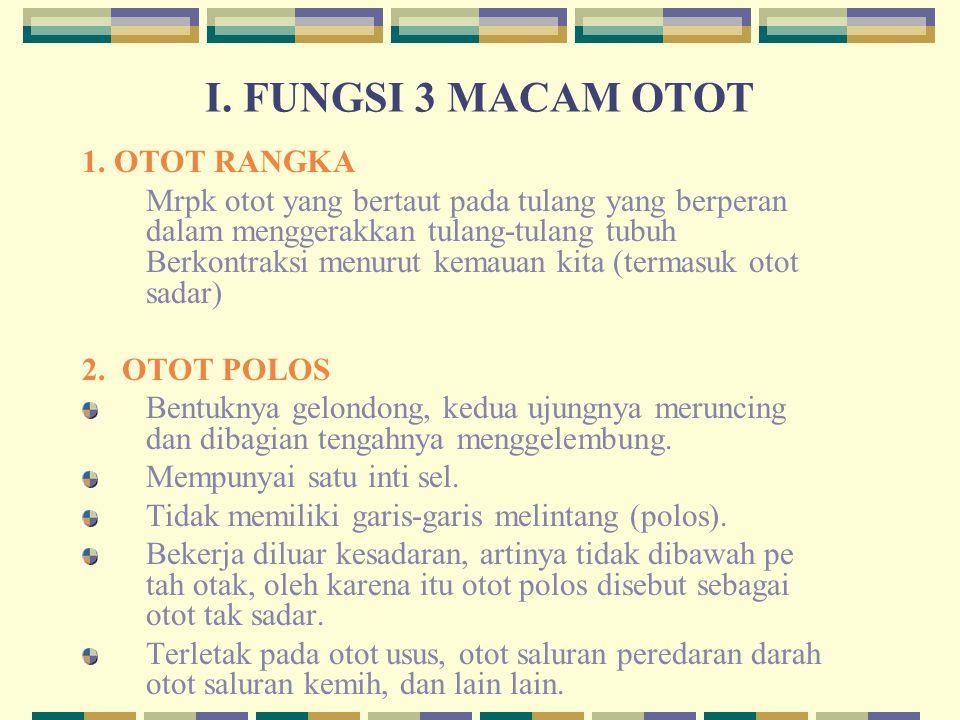 I. FUNGSI 3 MACAM OTOT 1. OTOT RANGKA Mrpk otot yang bertaut pada tulang yang berperan dalam menggerakkan tulang-tulang tubuh Berkontraksi menurut kem
