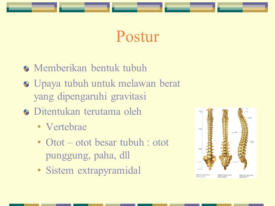 Postur Memberikan bentuk tubuh Upaya tubuh untuk melawan berat yang dipengaruhi gravitasi Ditentukan terutama oleh Vertebrae Otot – otot besar tubuh :