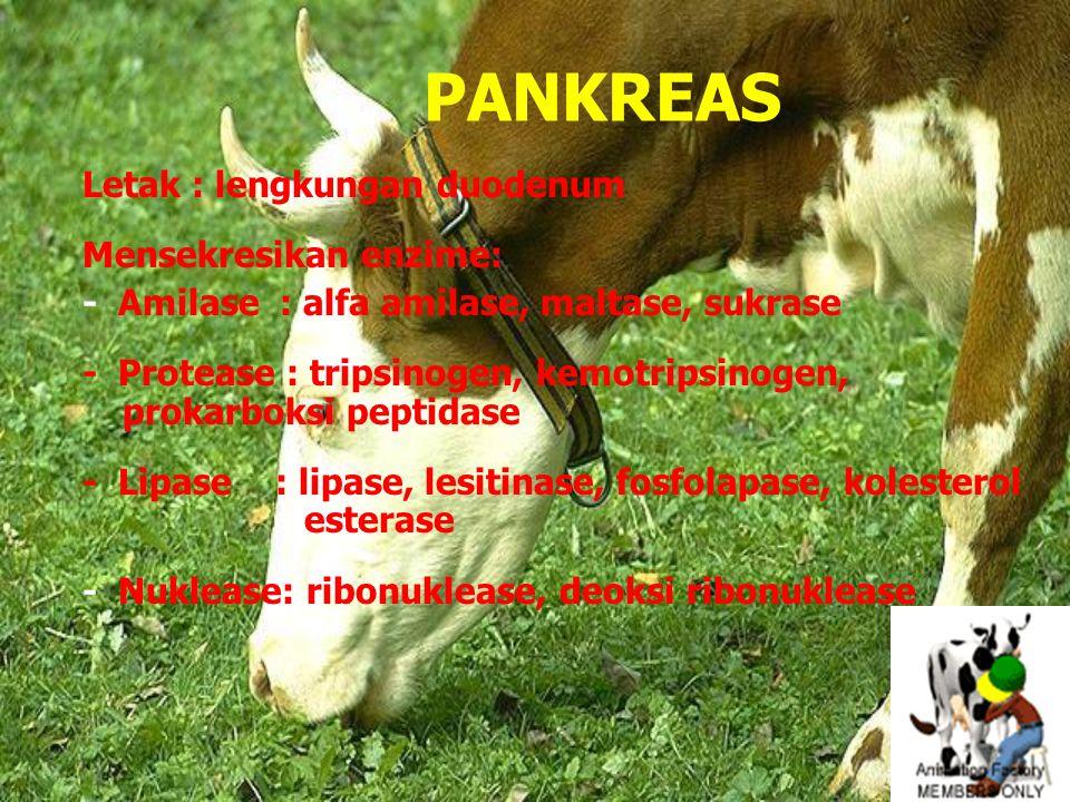 PANKREAS Letak : lengkungan duodenum Mensekresikan enzime: - Amilase : alfa amilase, maltase, sukrase - Protease : tripsinogen, kemotripsinogen, prokarboksi peptidase - Lipase : lipase, lesitinase, fosfolapase, kolesterol esterase - Nuklease: ribonuklease, deoksi ribonuklease