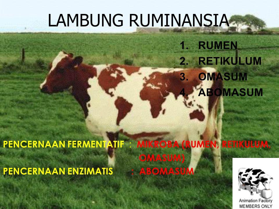 LAMBUNG RUMINANSIA 1.RUMEN 2.RETIKULUM 3.OMASUM 4.ABOMASUM PENCERNAAN FERMENTATIF : MIKROBA (RUMEN, RETIKULUM, OMASUM) PENCERNAAN ENZIMATIS : ABOMASUM