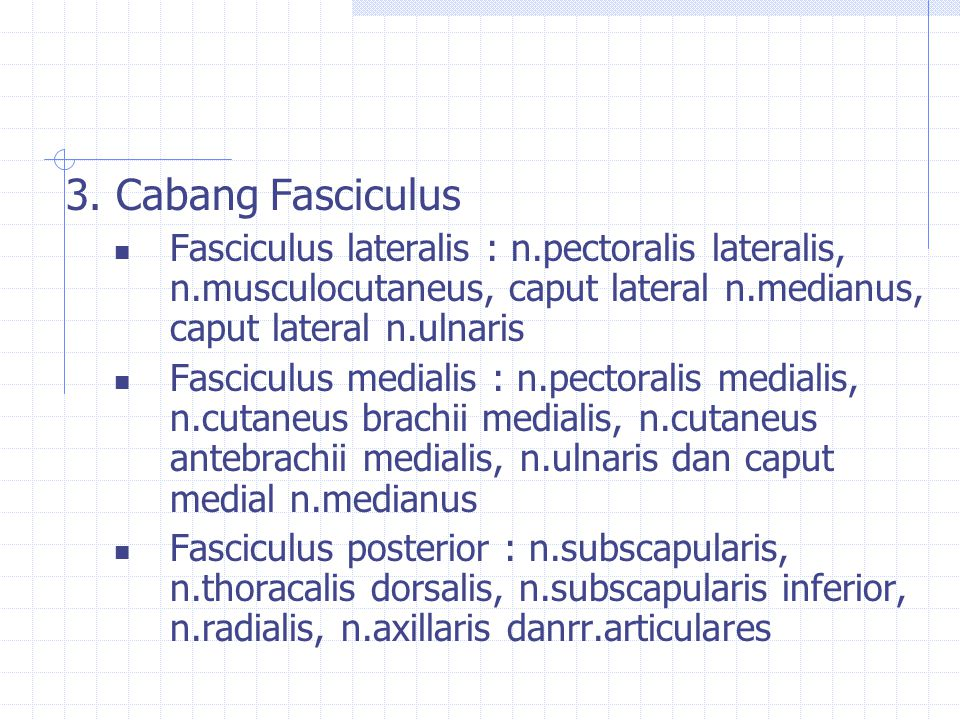 3. Cabang Fasciculus Fasciculus lateralis : n.pectoralis lateralis, n.musculocutaneus, caput lateral n.medianus, caput lateral n.ulnaris Fasciculus me