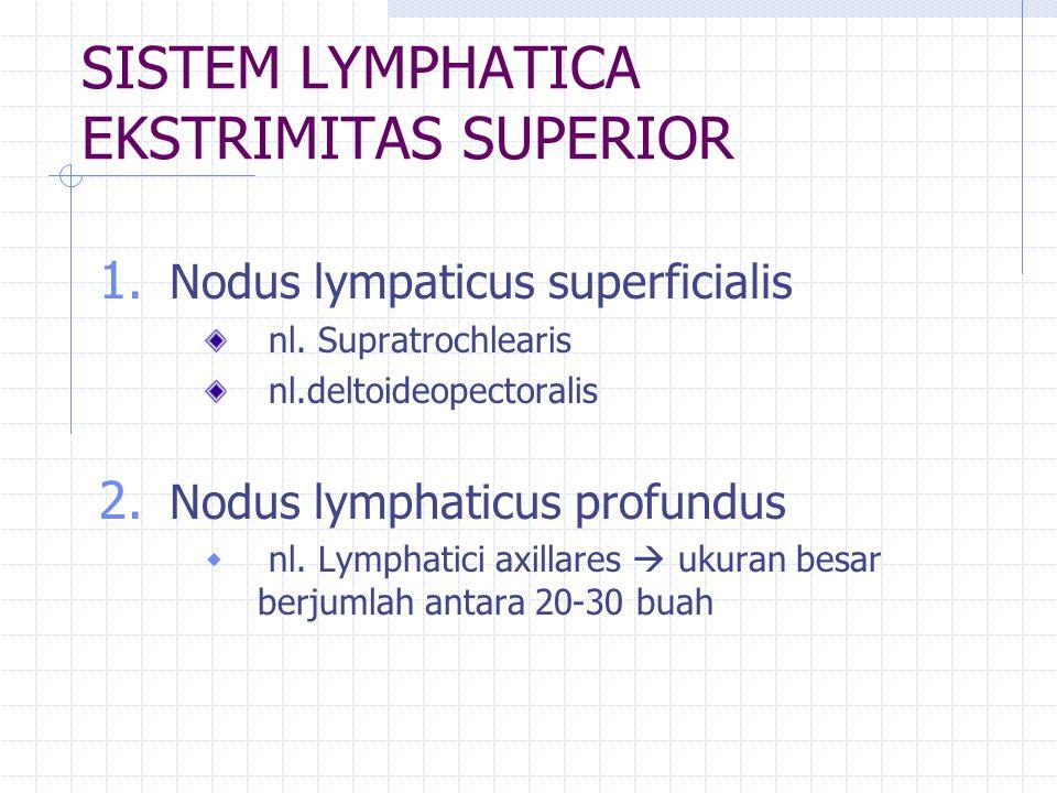 SISTEM LYMPHATICA EKSTRIMITAS SUPERIOR 1. Nodus lympaticus superficialis nl. Supratrochlearis nl.deltoideopectoralis 2. Nodus lymphaticus profundus 