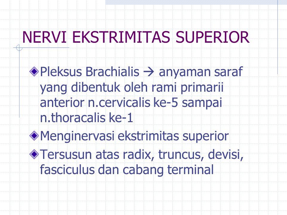 Pleksus Brachialis Radix dibentuk oleh divisi anterior dan posterior nervi cervicalis 5,6,7,8 dan thorakalis 1 Truncus dibentuk oleh radix Truncus superior  n.cervicalis 5 dan 6 Truncus medius  n.cervicalis 7 Truncus inferior  n.cervicalis 8 dan thorakal 1 Devisi dibentuk dari truncus Devisi anterior Devisi posterior Fasiculus dibentuk dari devisi Fasciculus lateralis Fasciculus medialis Fasciculus posterior