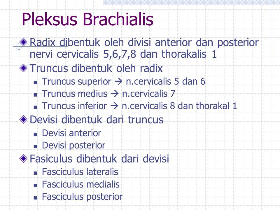 Pleksus Brachialis Radix dibentuk oleh divisi anterior dan posterior nervi cervicalis 5,6,7,8 dan thorakalis 1 Truncus dibentuk oleh radix Truncus sup