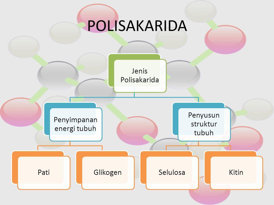 POLISAKARIDA Jenis Polisakarida Penyimpanan energi tubuh PatiGlikogen Penyusun struktur tubuh SelulosaKitin
