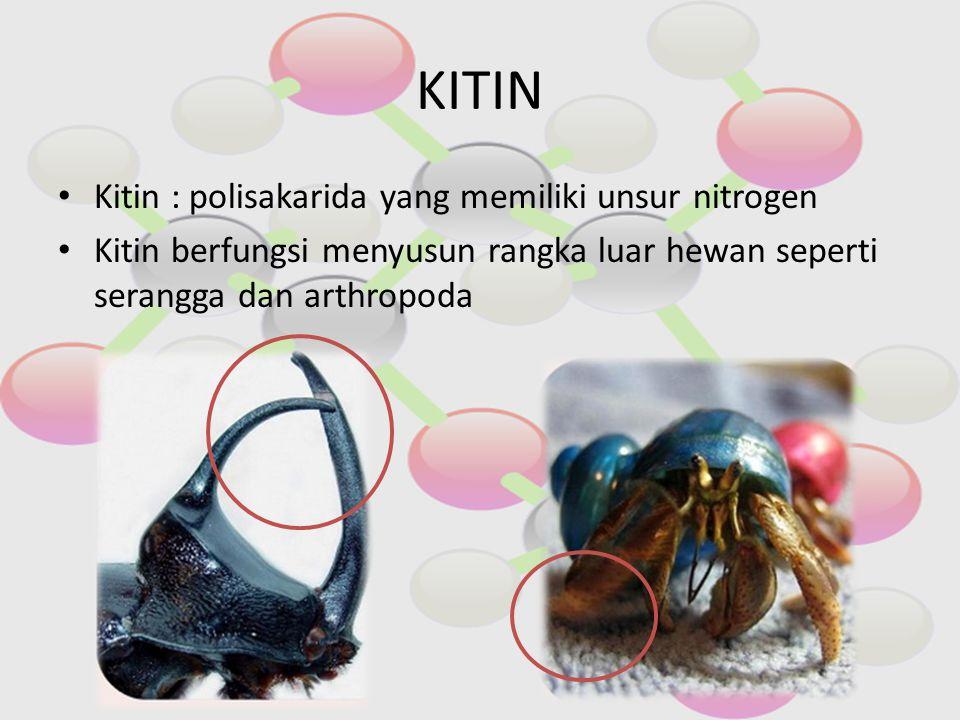 KITIN Kitin : polisakarida yang memiliki unsur nitrogen Kitin berfungsi menyusun rangka luar hewan seperti serangga dan arthropoda