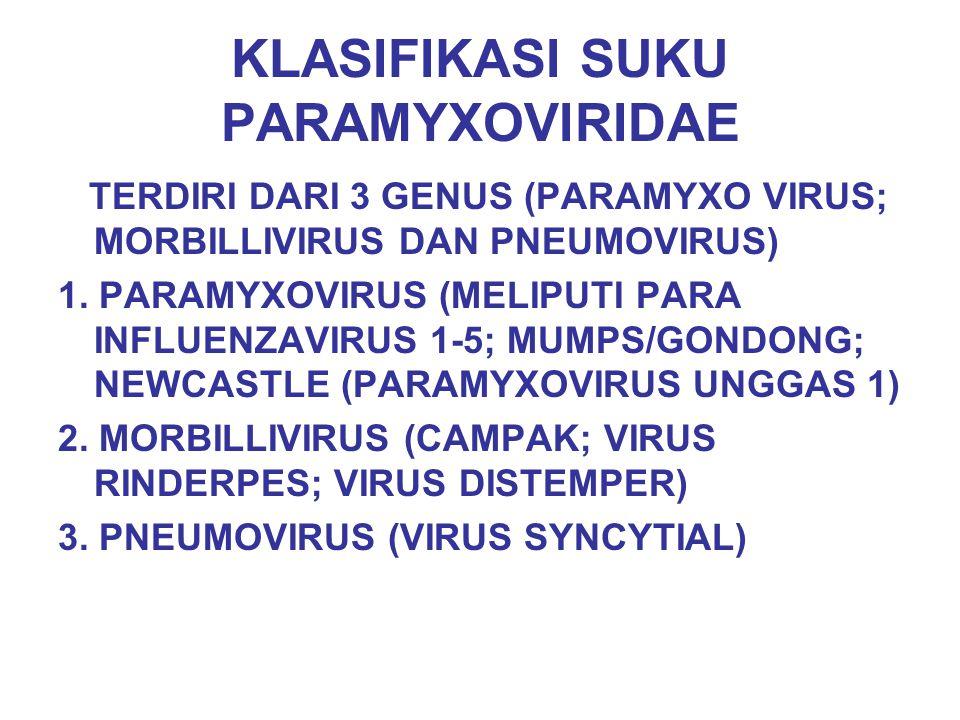 KLASIFIKASI SUKU PARAMYXOVIRIDAE TERDIRI DARI 3 GENUS (PARAMYXO VIRUS; MORBILLIVIRUS DAN PNEUMOVIRUS) 1. PARAMYXOVIRUS (MELIPUTI PARA INFLUENZAVIRUS 1