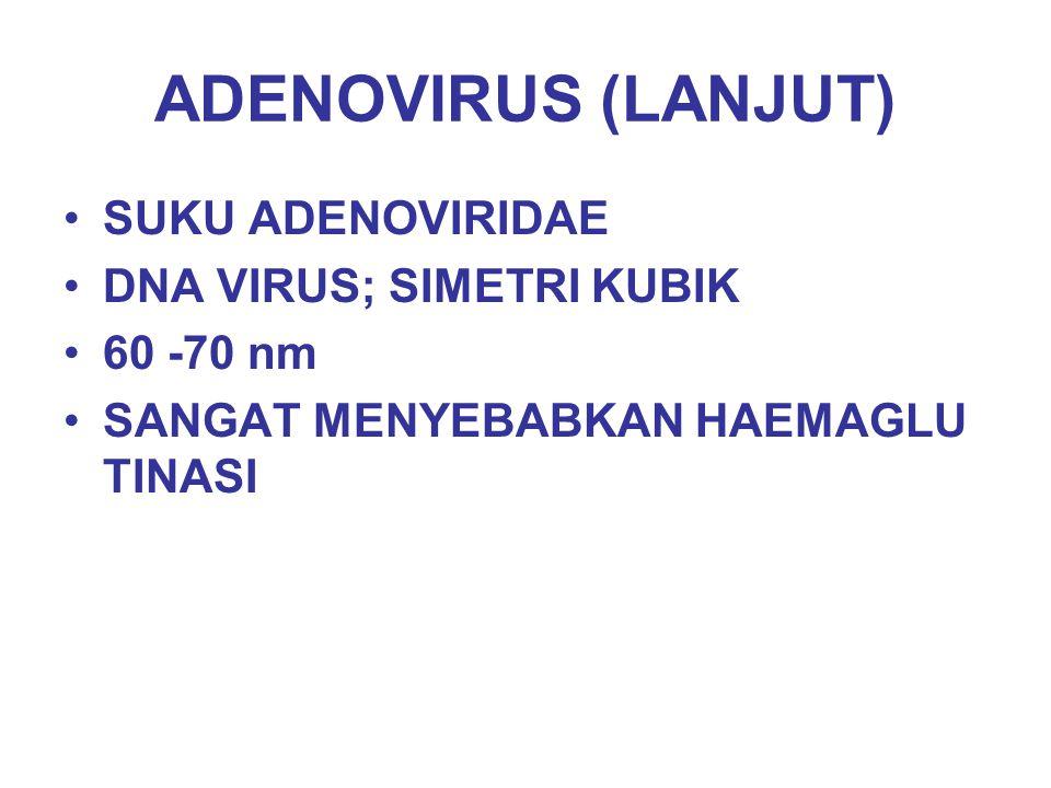 ADENOVIRUS (LANJUT) SUKU ADENOVIRIDAE DNA VIRUS; SIMETRI KUBIK 60 -70 nm SANGAT MENYEBABKAN HAEMAGLU TINASI