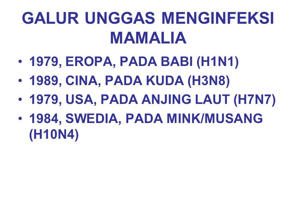 GALUR UNGGAS MENGINFEKSI MAMALIA 1979, EROPA, PADA BABI (H1N1) 1989, CINA, PADA KUDA (H3N8) 1979, USA, PADA ANJING LAUT (H7N7) 1984, SWEDIA, PADA MINK