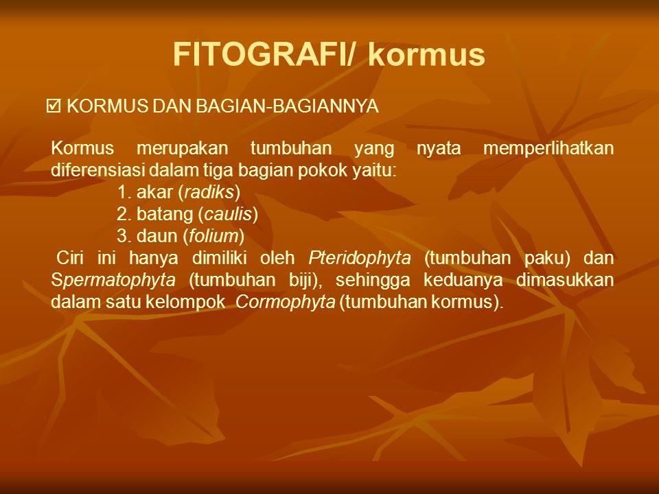 FITOGRAFI/ kormus  KORMUS DAN BAGIAN-BAGIANNYA Kormus merupakan tumbuhan yang nyata memperlihatkan diferensiasi dalam tiga bagian pokok yaitu: 1. aka