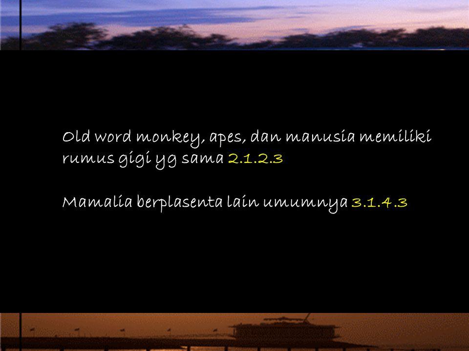 Old word monkey, apes, dan manusia memiliki rumus gigi yg sama 2.1.2.3 Mamalia berplasenta lain umumnya 3.1.4.3