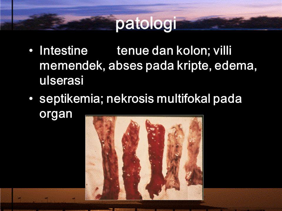 patologi Intestine tenue dan kolon; villi memendek, abses pada kripte, edema, ulserasi septikemia; nekrosis multifokal pada organ