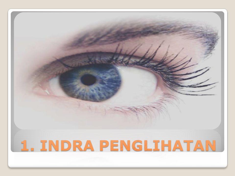 Mata Bagian Luar