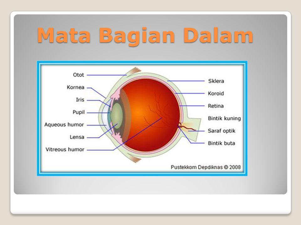 Otot – otot Bola Mata NoNama OtotFungsi Otot 1.m.Levator palpebralis sup, et.