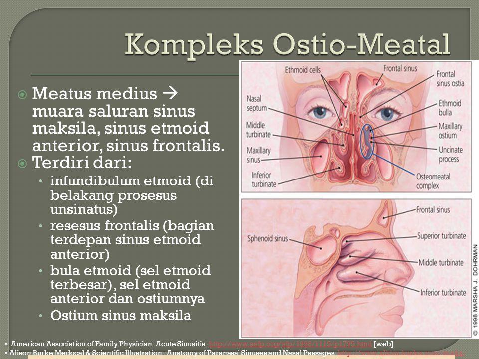  Meatus medius  muara saluran sinus maksila, sinus etmoid anterior, sinus frontalis.  Terdiri dari: infundibulum etmoid (di belakang prosesus unsin