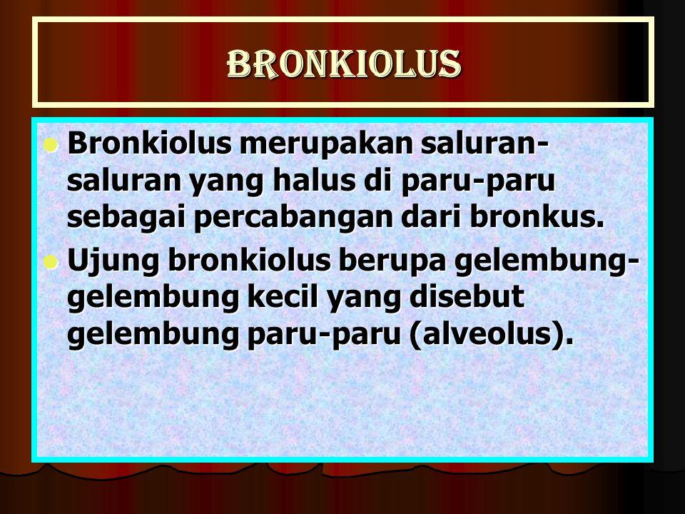 Bronkiolus Bronkiolus merupakan saluran- saluran yang halus di paru-paru sebagai percabangan dari bronkus. Bronkiolus merupakan saluran- saluran yang